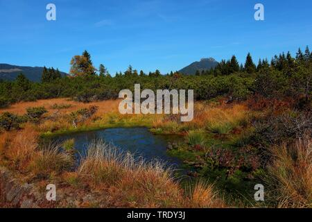 upland moor Kematsriedmoos in autumn, Germany, Bavaria, Allgaeu - Stock Photo
