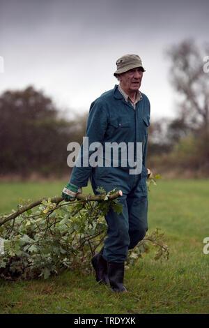 Forstarbeiter entfernt abgeschnittene Aeste, Niederlande, Overijssel   worker removing cutted branches, Netherlands, Overijssel   BLWS512857.jpg [ (c) - Stock Photo