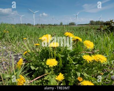Gemeiner Loewenzahn, Pusteblume, Kuhblume, Wiesen-Loewenzahn, Wiesenloewenzahn (Taraxacum officinale), Loewenzahn und Windpark, Deutschland, Niedersac - Stock Photo