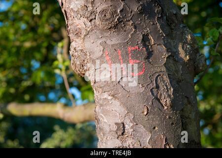 Baummarkierung, Deutschland, Hessen   mark on a tree stem, Germany, Hesse   BLWS517141.jpg [ (c) blickwinkel/McPHOTO/A. Pulwey Tel. +49 (0)2302-279322 - Stock Photo