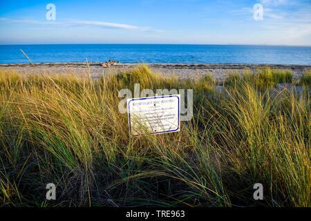 Strandhafer, Strand-Hafer (Ammophila arenaria), Betreten der Duene verboten, Duenenschutz in Haffkrug, Deutschland, Schleswig-Holstein, Haffkrug | bea - Stock Photo