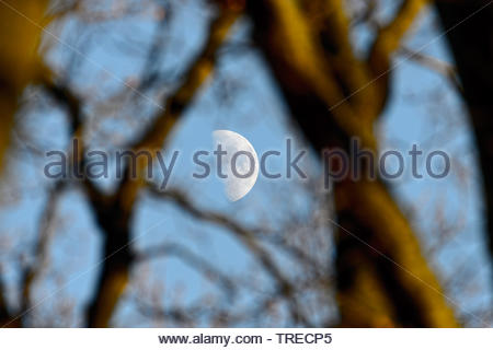 moon between branches, Germany - Stock Photo