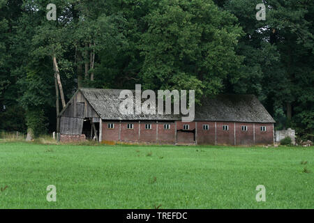 decaying barn at forest edge, Netherlands, Gelderland, Achterhoek - Stock Photo