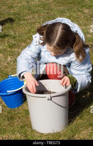 European common toad (Bufo bufo), girl looking into a bucket, Netherlands