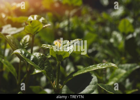 Young plant sprout in the morning with sun light, worms eye level view - Stock Photo