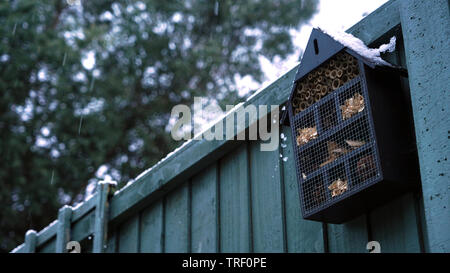 Bee hive with snow falling past it - Stock Photo