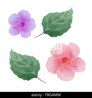 abstract watercolor hibiscus flowers end leaves isolated on white, hand drawn, element for design - Stock Photo
