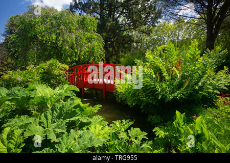 The small red wooden footbridge of the Bayonne botanical garden (France). This ornamental garden has been laid out according to a Japanese model. - Stock Photo