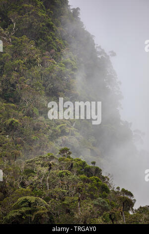 Low cloud on the Col de Boeuf, Réunion Island, France - Stock Photo