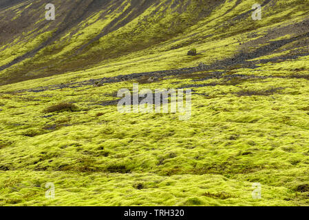 Eldhraun lava field, flow and ridge covered with green moss in Iceland - Stock Photo