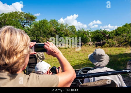 Tourists watch wildebeests on safari at the Phinda Private Game Reserve, an andBeyond owned nature reserve in eastern South Africa. - Stock Photo
