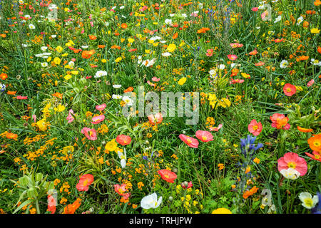field of yellow flowers - Stock Photo
