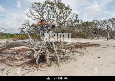 Driftwood Beach Jekyll Island Brunswick Georgia USA - Stock Photo