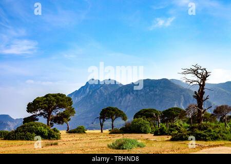 Pine trees on Cirali (çıralı) Beach in Antalya, Turkey - Stock Photo