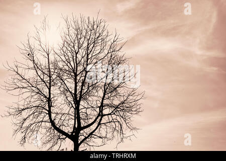Silhouette of a single dark dead tree with birds on it against the sun and blue sky. Sepia toned image - Stock Photo