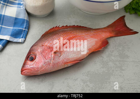 Fresh raw Northern red snapper ready to cook - Stock Photo
