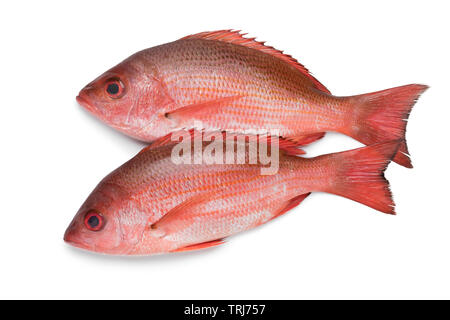 Two fresh raw Northern red snappers isolated on white background - Stock Photo