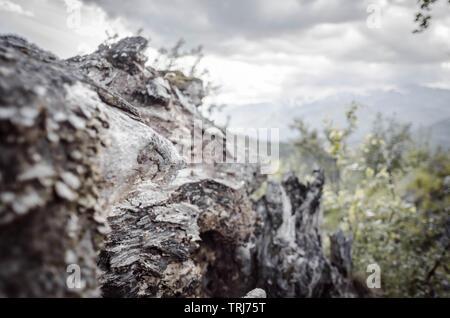 Alte Wurzel vor dem Blick auf die Karpaten - Stock Photo
