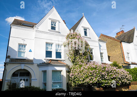 A period semi-detached house with a beautiful cascade of pink roses, London, England, UK - Stock Photo
