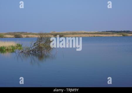 Nature reserve area called Het Zwanenwater near the village of Callantsoog in the Netherlands - Stock Photo