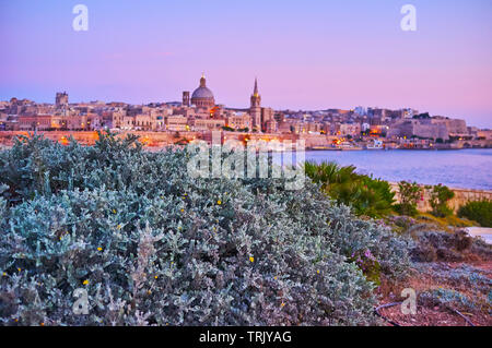 Enjoy romantic evening in garden of Tigne Point peninsula with a view on medieval Valletta walls and city through the silver carpet plants, Sliema, Ma - Stock Photo
