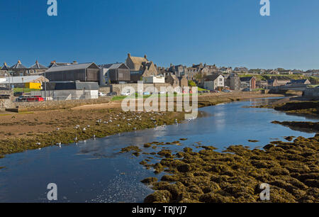 Town of Wick, Caithness Scotland with buildings huddled beside calm waters of River Wick and seagulls on bank under blue sky - Stock Photo