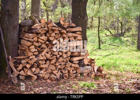 Split wood, stacked between the trunks of two trees to dry outside, at Blackhawk Memorial Park, Woodford, Wisconsin, USA - Stock Photo