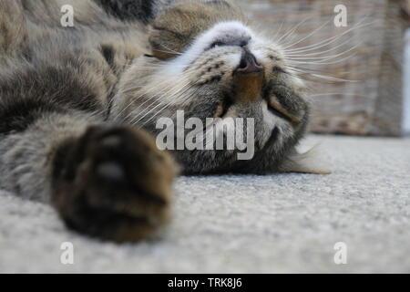 Cute brown cat sleeping on grey stone floor. - Stock Photo