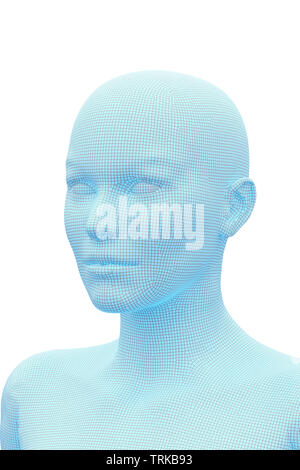Woman's head. 3D Rendering image of female human body. Wireframe model isolated on white background. - Stock Photo