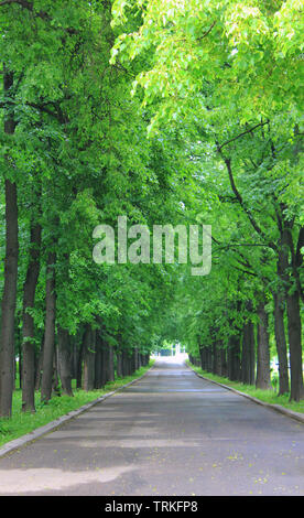Nature spring park road with green tunnel surrounded by trees. Scenic view with alleywau going through forest and no people - Stock Photo