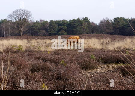 Nature reserve area called Het Gooi near Hilversum in the Netherlands. - Stock Photo