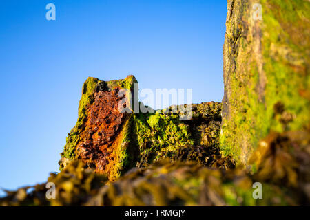 Rusty Ironwork on an algae covered seawall - Stock Photo