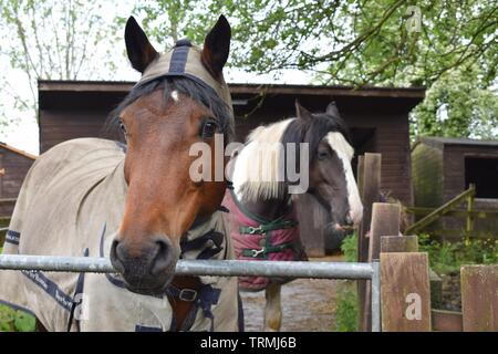 Two horses in a stable - Stock Photo