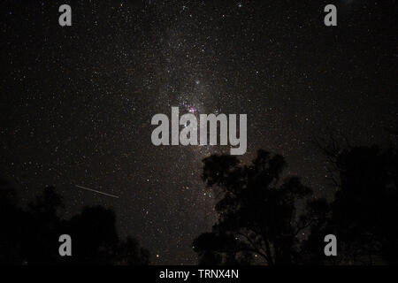 Milky Way and moving satellite over trees at Flinders Ranges, South Australia, Australia - Stock Photo