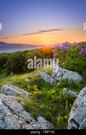 Amazing colorful sunrise and sun-rays above horizon mountains, foreground rocks, fresh, sunlit purple lilac and green grass and flowers during spring - Stock Photo