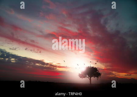 Isolated tree in the countryside during a colorful and cloudy sunset - Stock Photo