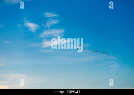 birds flying to home on white blue sky soft cloud background - Stock Photo