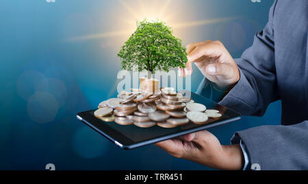 hand Coin tree The tree grows on the pile. Saving money for the future. Investment Ideas and Business Growth background with bokeh sun - Stock Photo