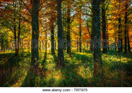 Autumn scenery in a forest, with the sun casting beautiful rays of light through the trees, Tskaltubo, Georgia. - Stock Photo