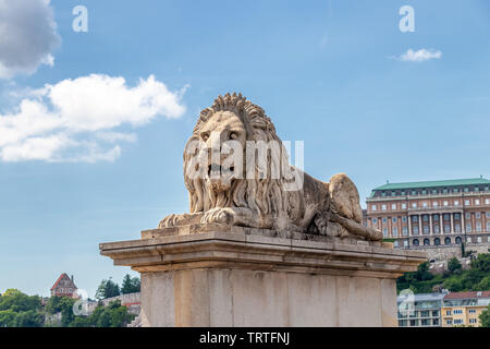 Lion on Chain Bridge on the Danube River in Budapest, Hungary - Stock Photo