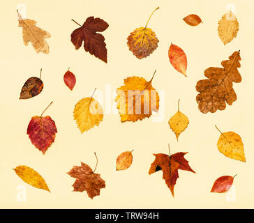 collage from many dried autumn fallen leaves on light yellow pastel paper background - Stock Photo