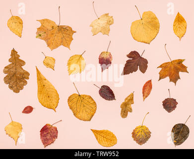 collage from many dried autumn fallen leaves on pink pastel paper background - Stock Photo