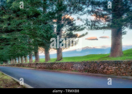 Road through Cook Island Pines. Kapalua, Maui, Hawaii. - Stock Photo