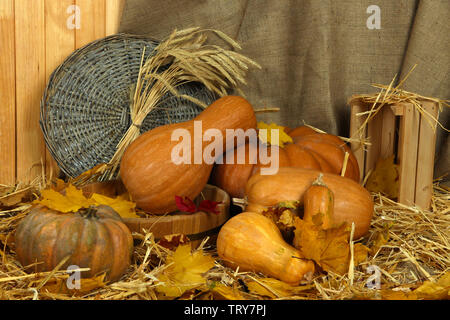 Pumpkins in wooden tub with wicker stand and crate on straw on sackcloth background - Stock Photo