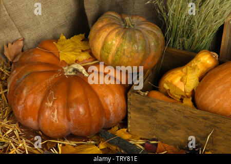 Pumpkins in crate on straw on sackcloth background - Stock Photo