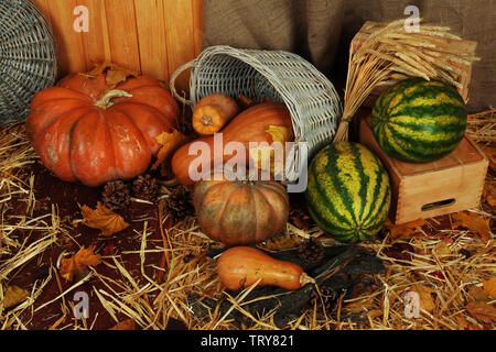 Pumpkins in basket and watermelons on crate on straw on sackcloth background - Stock Photo