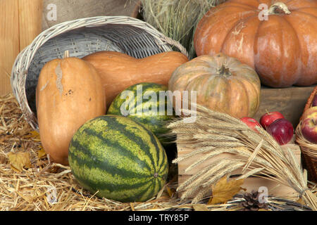 Pumpkins in basket with apples and watermelons on straw close up - Stock Photo