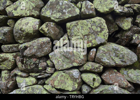 Lichens growing on a drystone wall in the Lake District, England - Stock Photo
