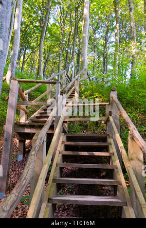 ancient beech forest, ruegen islans, germany - Stock Photo