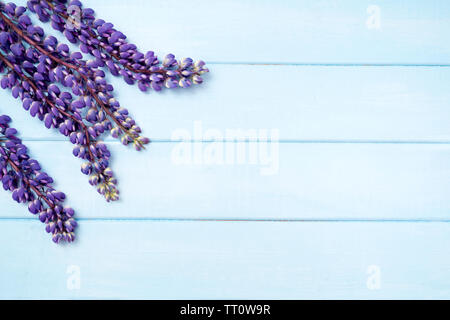lupine on pastel blue wooden background - Stock Photo